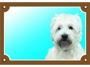 Barevná cedulka Pozor pes, West highland white terier