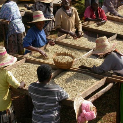 Yrgalem - Etiopie: Espresso (Arabika 100% - jednodruhová)
