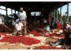 coffeeholics cafe import kenya ruka chui (4)