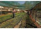 coffeeholics cafe import kenya ruka chui (9)