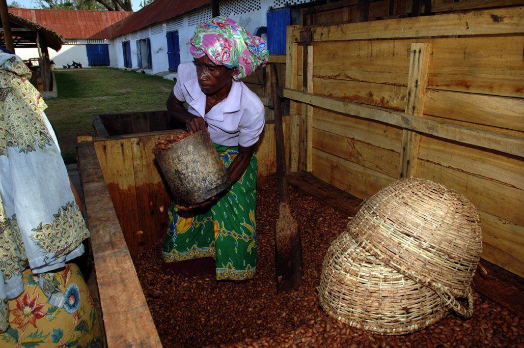Fermentace-kakaove-boby-Francois-Pralus-Madagaskar-Cokobanka-cz-2-1029