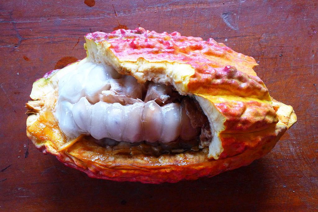 Peru-kakaovy-bob-lusk-cokobanka-cz