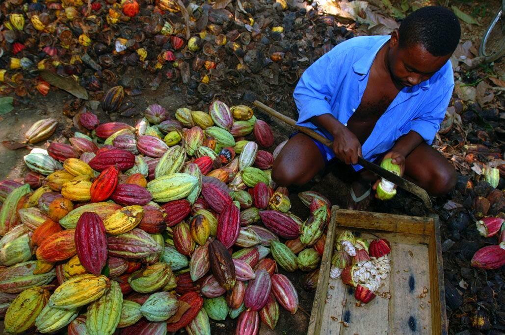 Pralus-Madagaskar.kakaove-boby-lusk-muz-cokobanka-cz