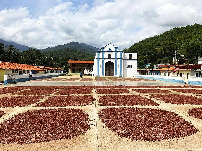 wikipedie-Cacao_Chuao_plantaz-kakaove-boby-cokobanka-cz-web