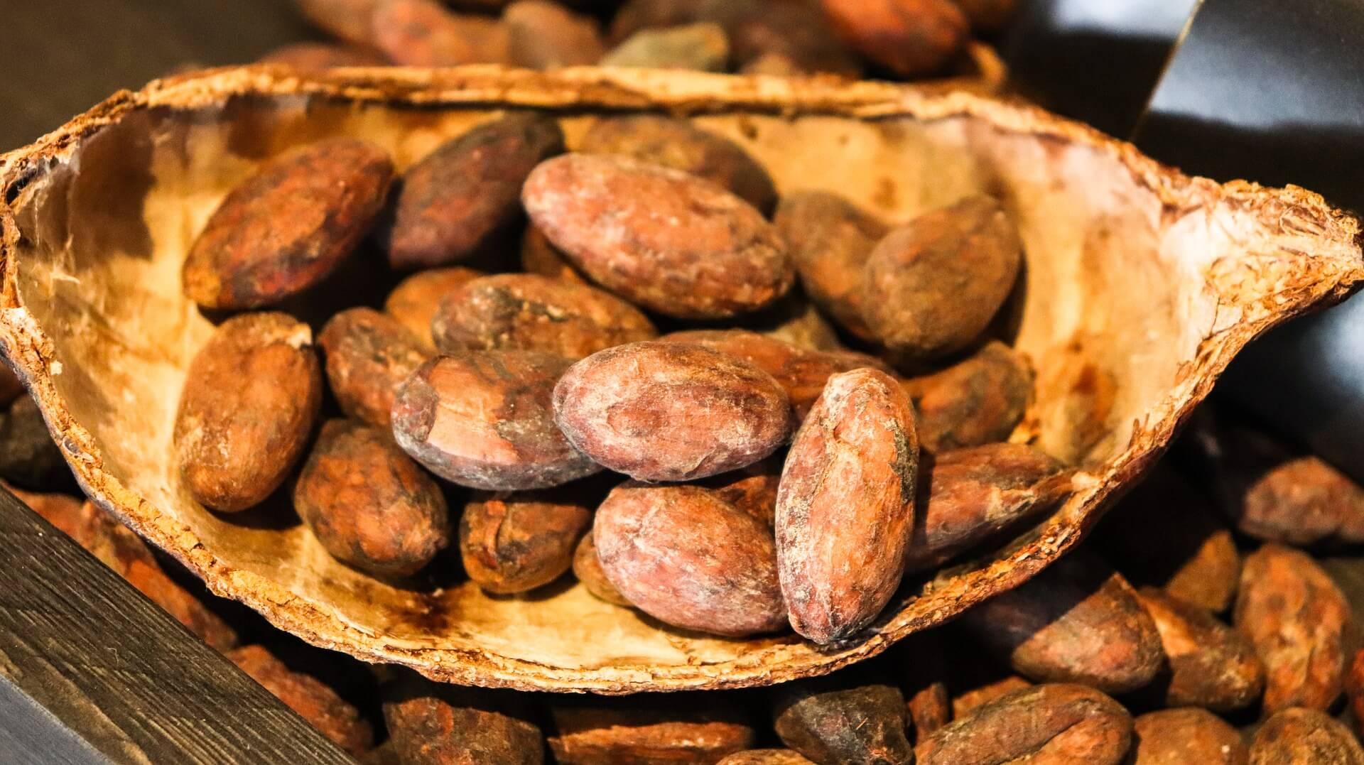 Tajemství kakaového bobu