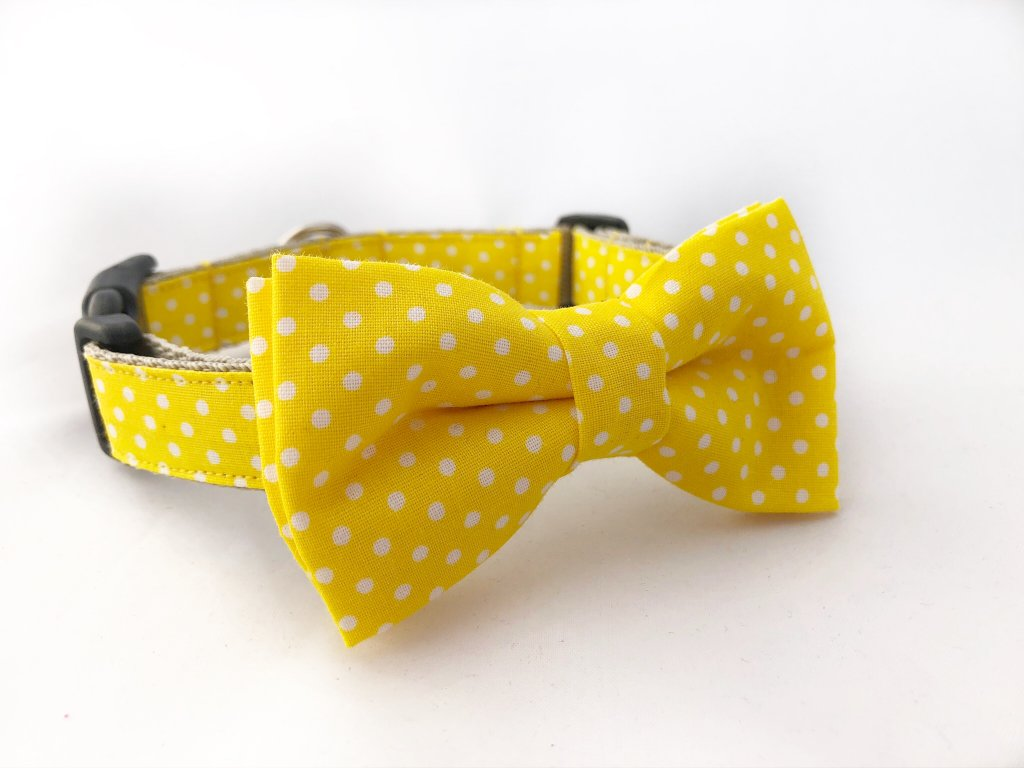 Žlutý obojek s puntíky pro pejska + motýlek