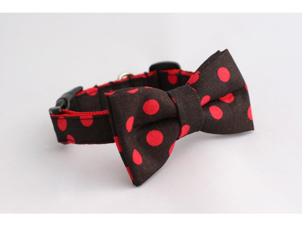 Obojek černý červené puntíky pro pejsky +motýlek
