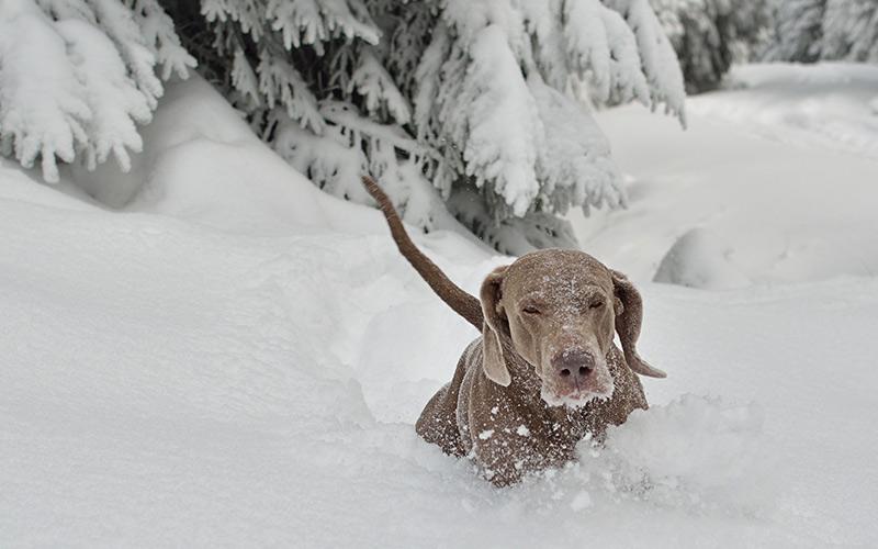 Vánoční soutěž s psím Gelorenem