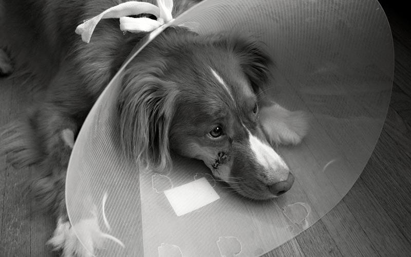 Soutěžte s Gelorenem DOG o roční léčbu kloubů u vašeho veterináře