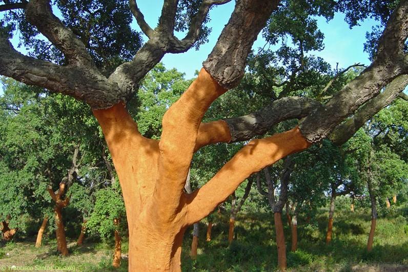 Tajomstvá stromu