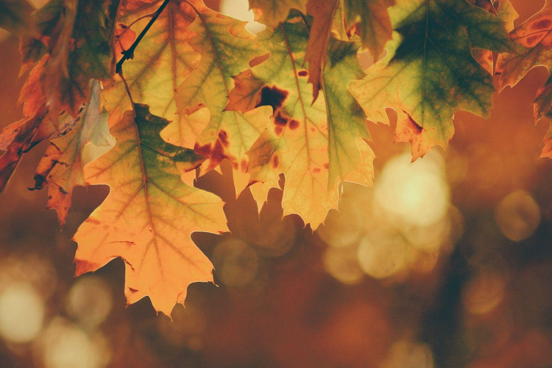 Podzim ve vašich vlasech