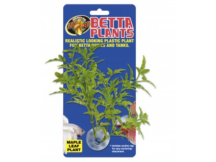 13389 betta plant javorovy list