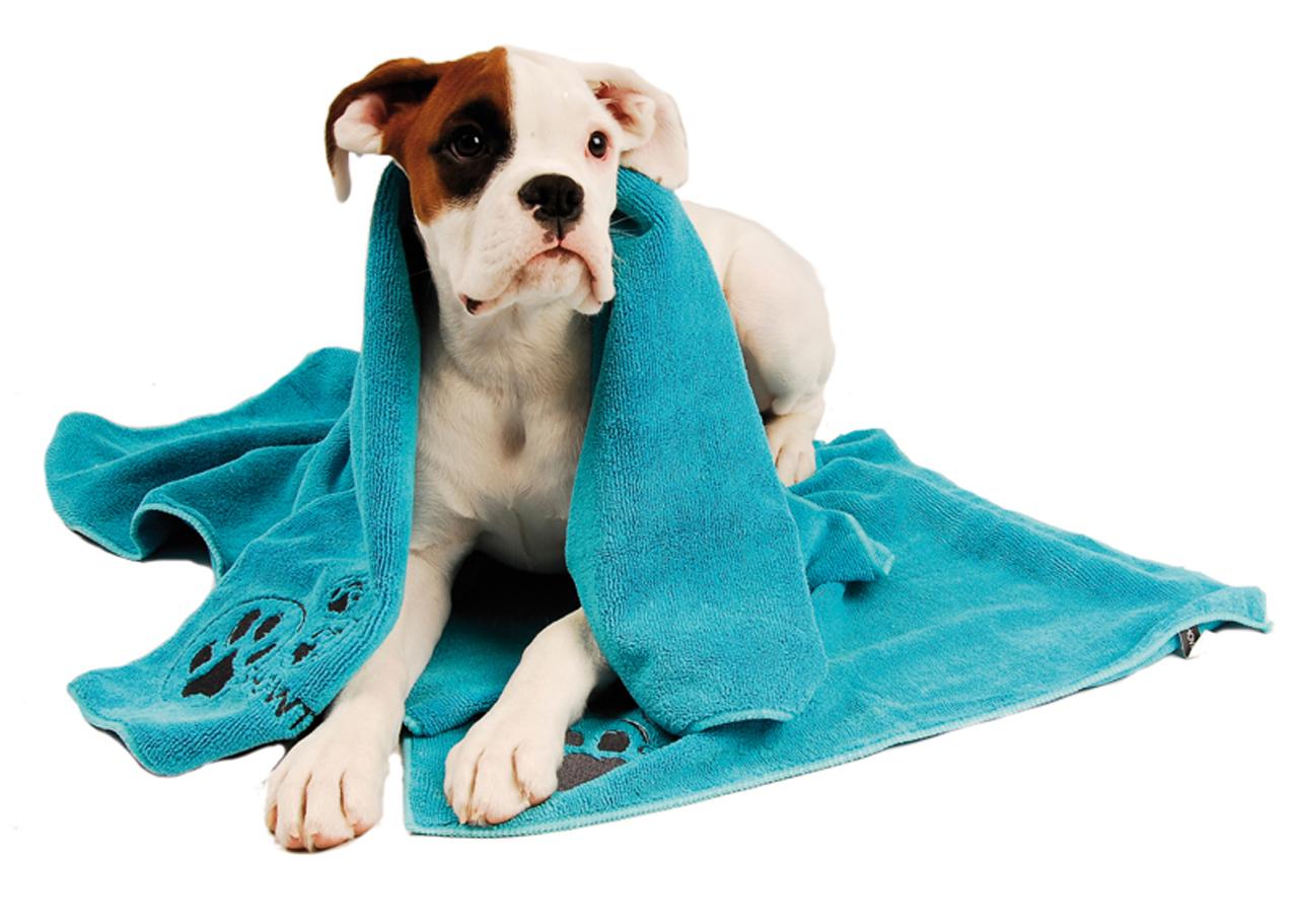 Hygiena pro psa