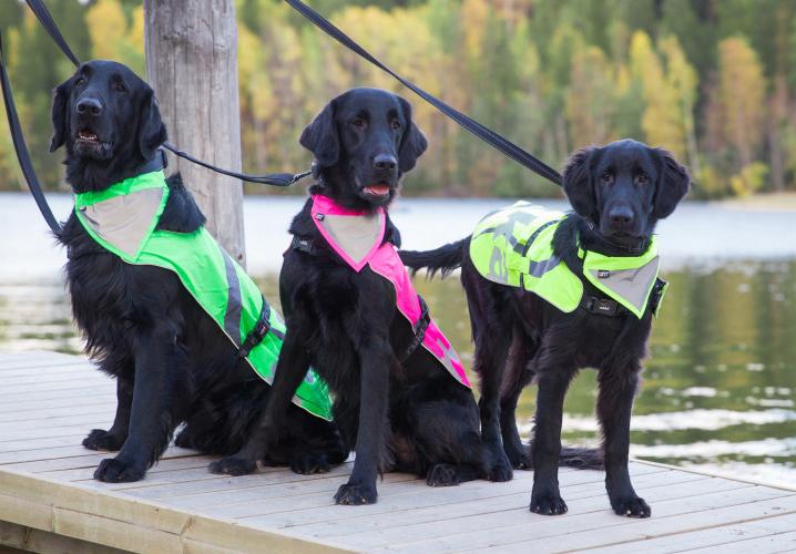 Ochranné oblečenie pre psa