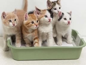 Podstielky pre mačky