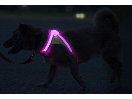 viacfarebne svietiaci postroj pre psa