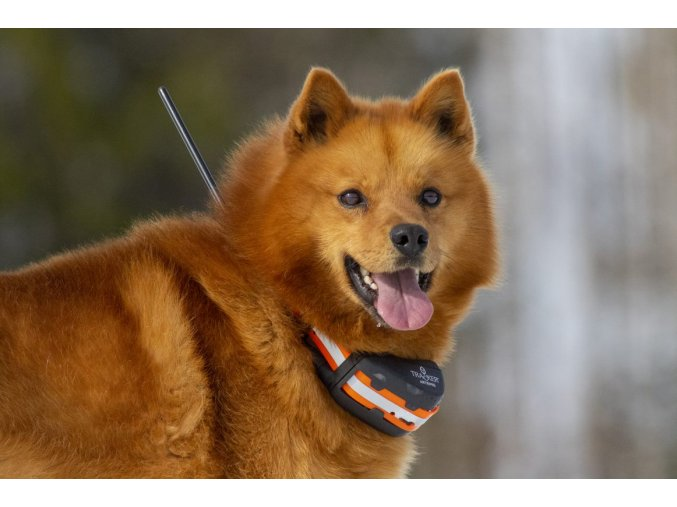 najlepsie GPS zariadenie pre psa na trhu