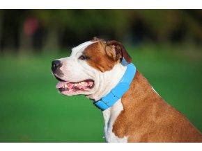 Plochý veľmi kvalitný kožený dvojvrstvový obojok pre psa modrej farby