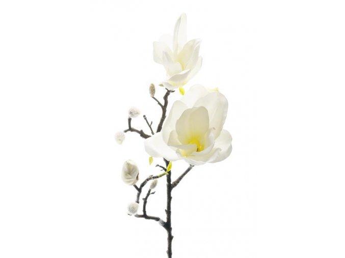 Magnolia - biela