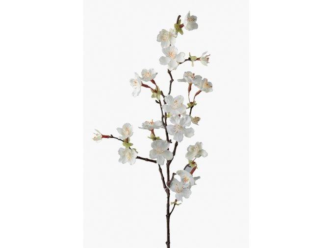 Rozkvitnutý konár - čerešňa - biely