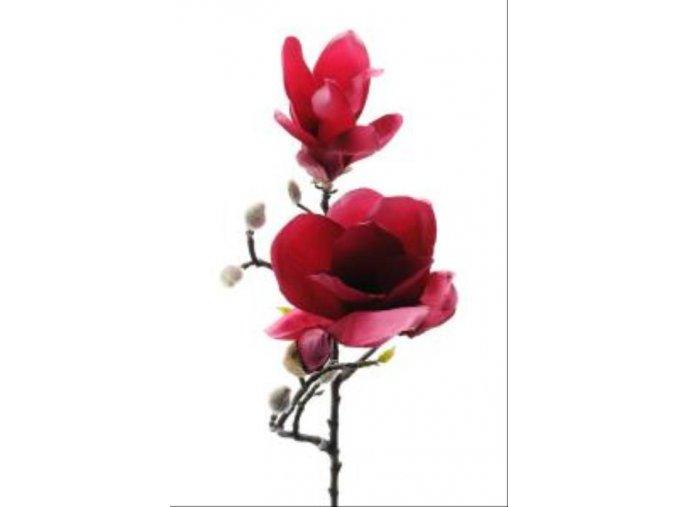 Magnolia - bordová