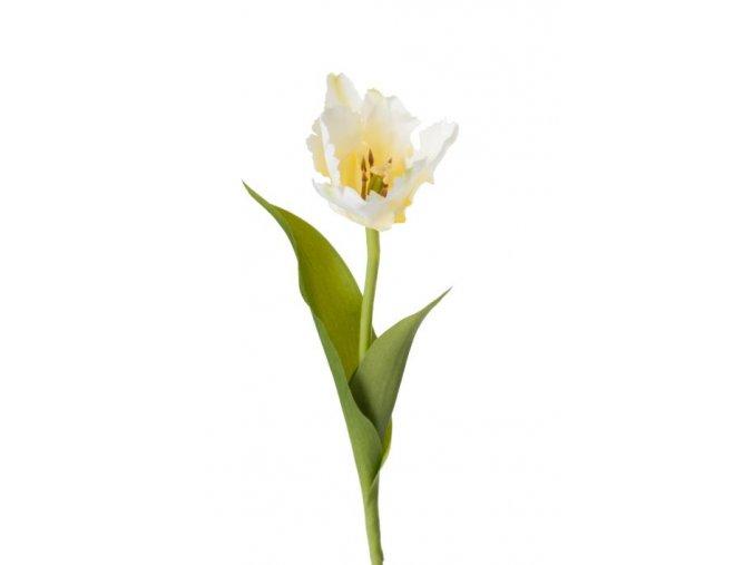 "Tulipán ""strapatý""- bielo-zelenkavý"