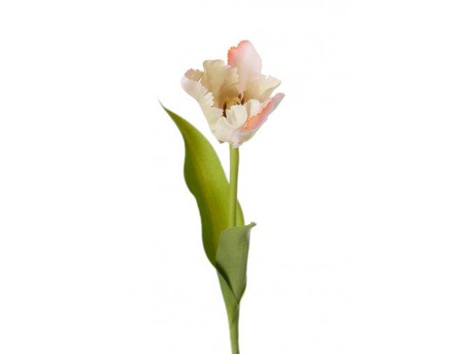 Tulipán - bledoružovo - zelený