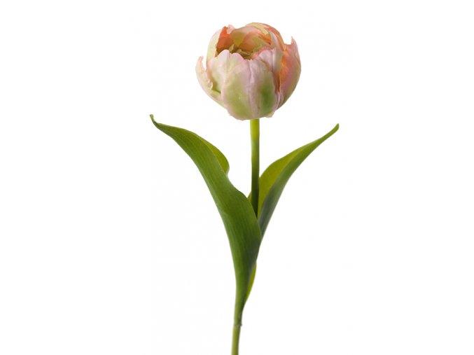 tulipán1