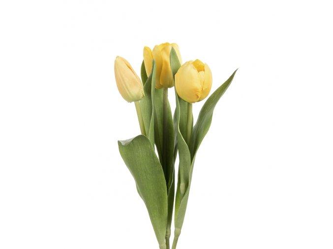 Tulipán - žltý