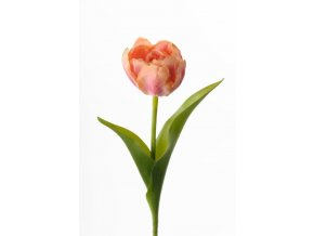 Umelý tulipán - marhuľový