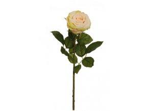 Ruža Rafaela