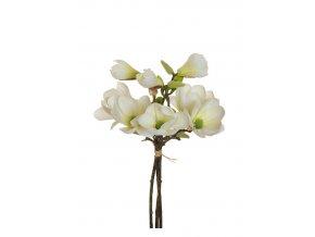 magnolie biele