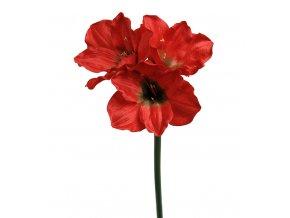 Amarylis - červený
