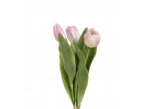 Tulipán - ružový