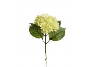 Hortenzia - zelená