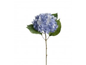 Hortenzia - modrá