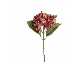 Hortenzia - bordovo-zelená
