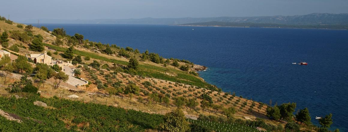 Vinohrady01