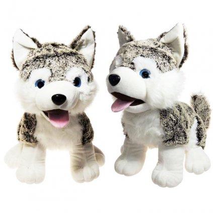 Pes Husky