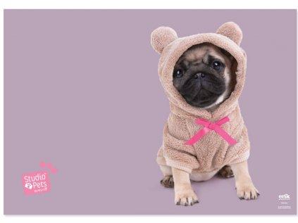 PODLOŽKA NA STŮL|STUDIO PETS  DOG|49,5 x 34,5 cm|DOGS