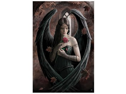 PLAKÁT 61 x 91,5 cm|STOKES ANNA  ANGEL ROSE
