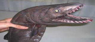 Ruský rybár zdieľa strašidelné fotografie hlbokomorských tvorov