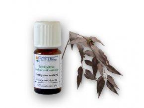 Eukalyptus - blahovičník mátový (Eucalyptus piperita)