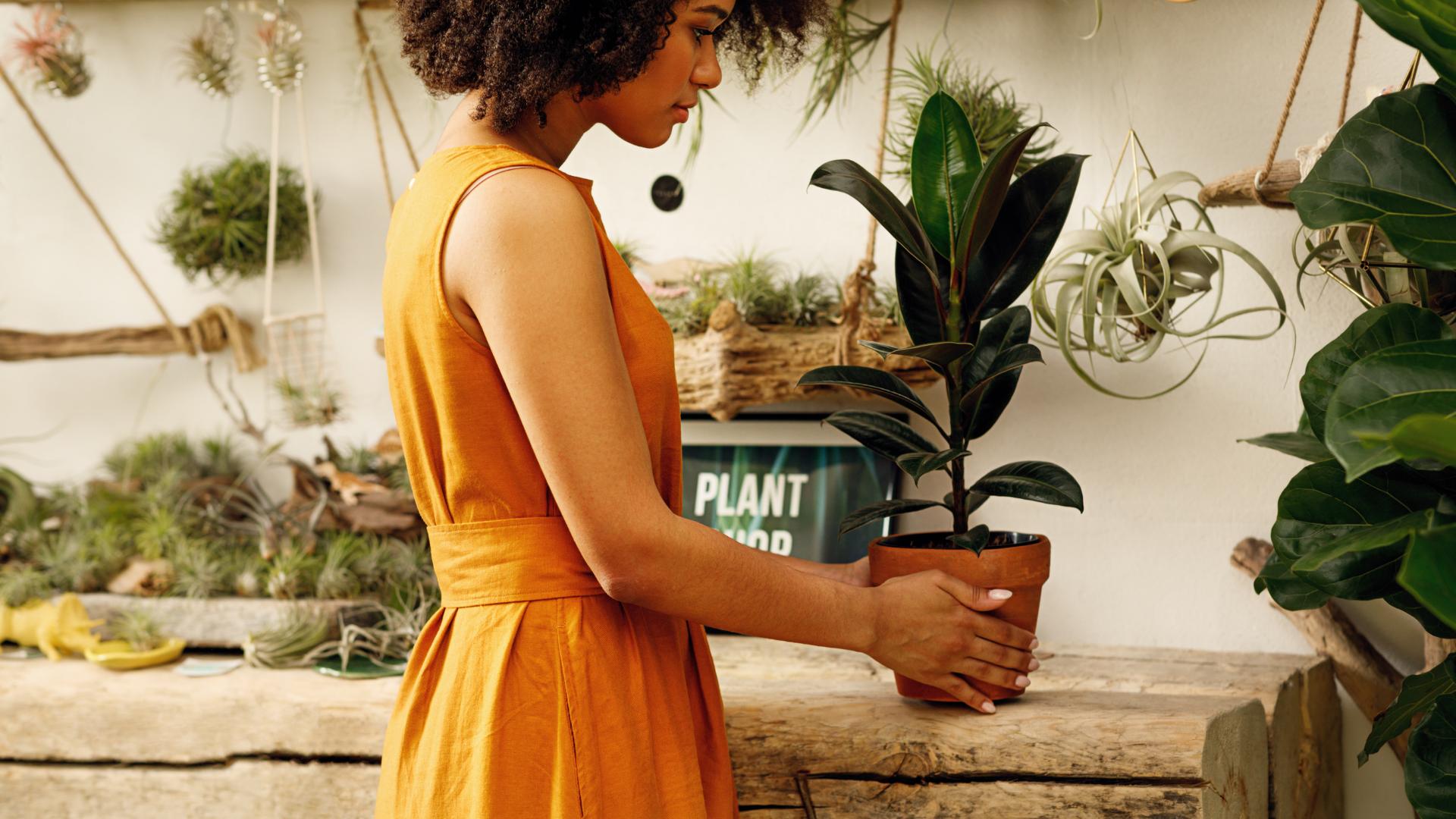 4 téměř nesmrtelné rostliny do bytu