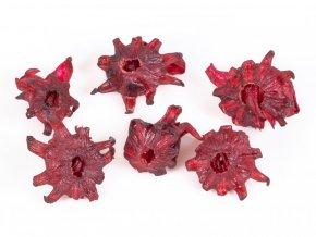 302 ibiskovy kvet