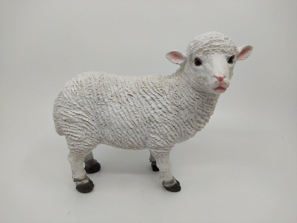 ovce b1