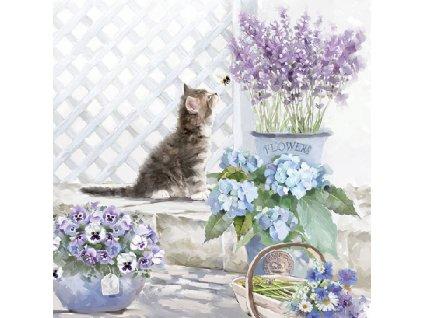Napkin 33 Kitten