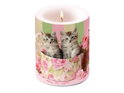 Svíčka dvouplášťová Cats In Box