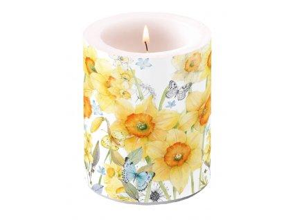 Svíčka dvouplášťová Classic Daffodils