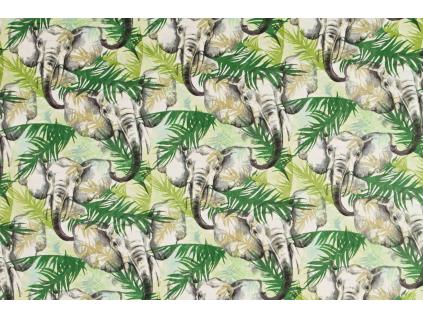 Sloni v džungli1